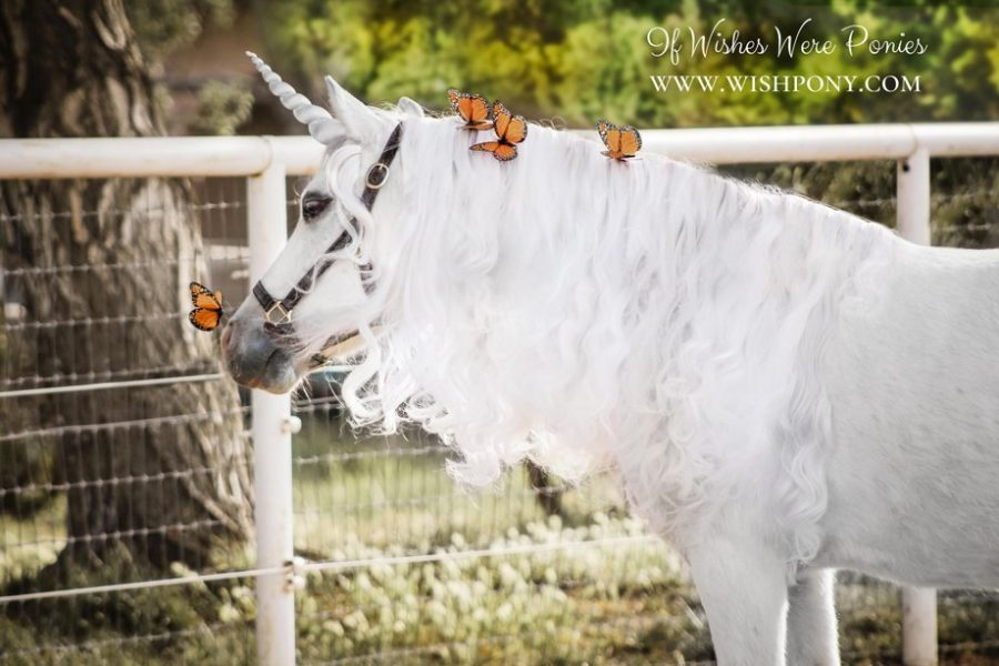 Silver Unicorn Horn for Horse