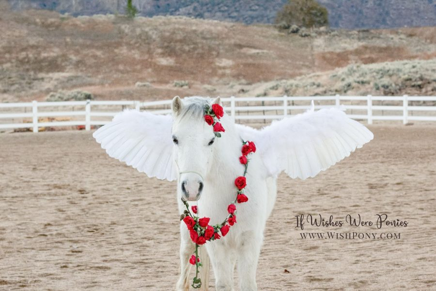 Pegasus with Rose Vine Lead and Ear Loop